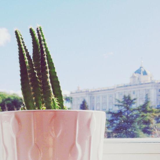 Mi casa con vistas. Plantas Cactus Palacio Real Madrid