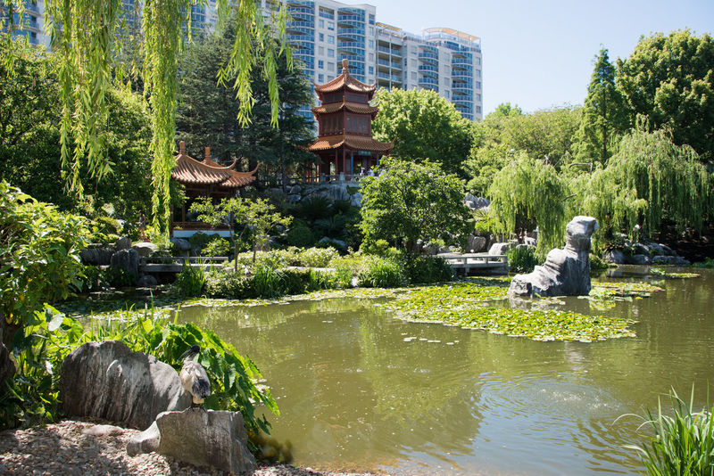 Sydney,NSW,Australia-November 18,2016: Chinese Garden in Sydney, Australia. Architecture Australia Beauty In Nature Built Structure Chinese Chinese Garden Chinese Garden Of Friendship Fountain Garden Gazebo Greenery Growth Leaf Lotus Lush Foliage Nature Outdoors Pergola Plant Pond Statue Sydney Tree Water Weeping Willow