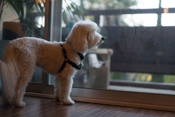 Dog Walking Dog Adoption Dog Hotel Dog Shelter Pet Shelter Pet Walking