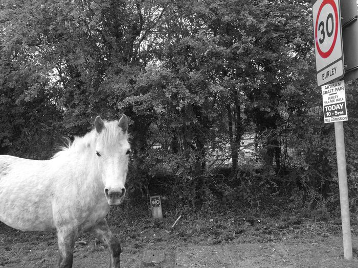 Horse Animal Themes Nature Speed Fun Blackandwhite Tree Mammal One Animal Domestic Animals Day Outdoors No People Lyndhurst England Colors Retro Newforest EyeEmNewHere EyeEmNewHere The Week On EyeEm