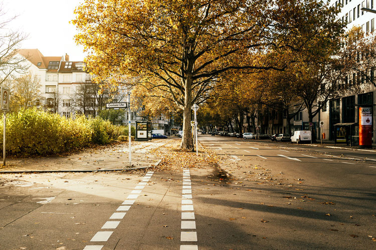 Road by trees in city