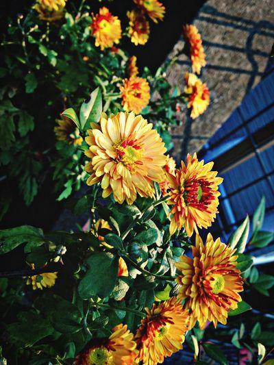 Flower Beatuiful
