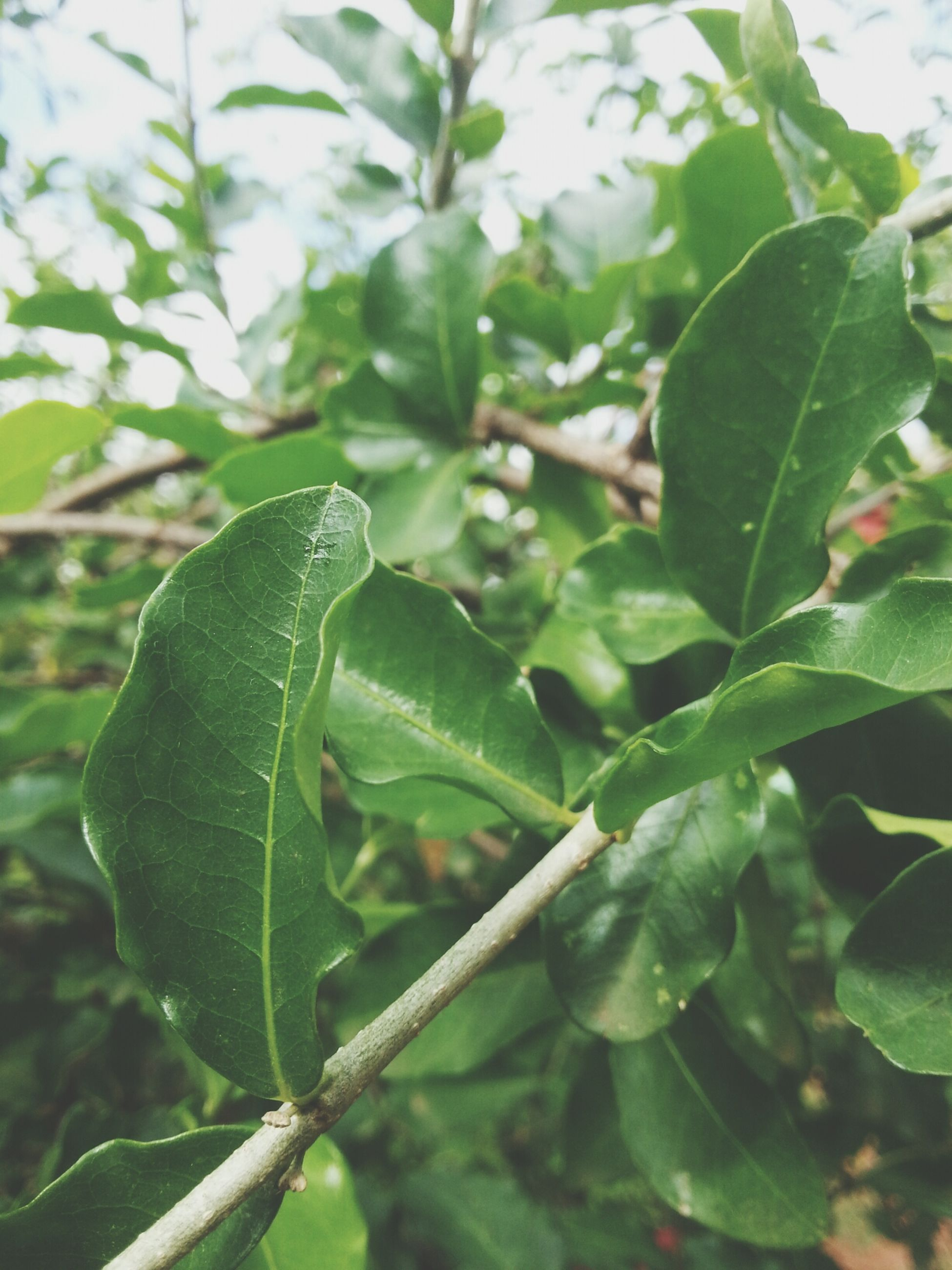 leaf, green color, focus on foreground, close-up, growth, plant, nature, animals in the wild, one animal, branch, wildlife, animal themes, tree, outdoors, day, selective focus, no people, leaf vein, beauty in nature, green