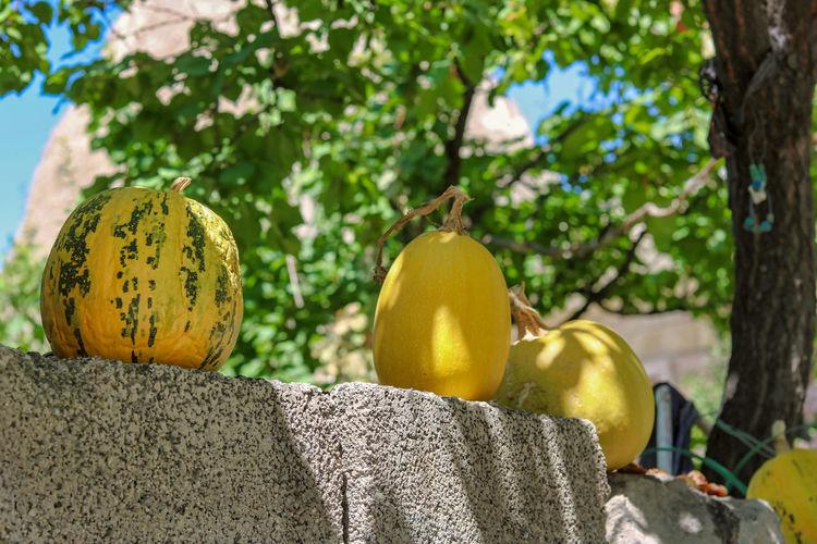 Close-up of yellow pumpkins