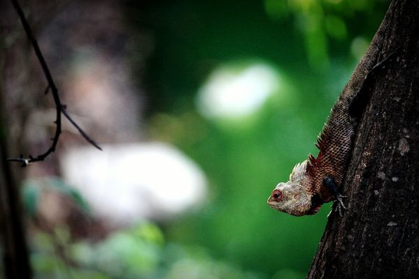 Reptile Chameleon Lizard Close-up Tree Trunk Crawling Growing Branch Slow Woods