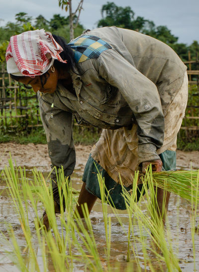 The Rice Cultivation Season Basket Casual Clothing Day Focus On Foreground Grass Growth Leisure Activity Lifestyles Nature Outdoors Plant Showcase July