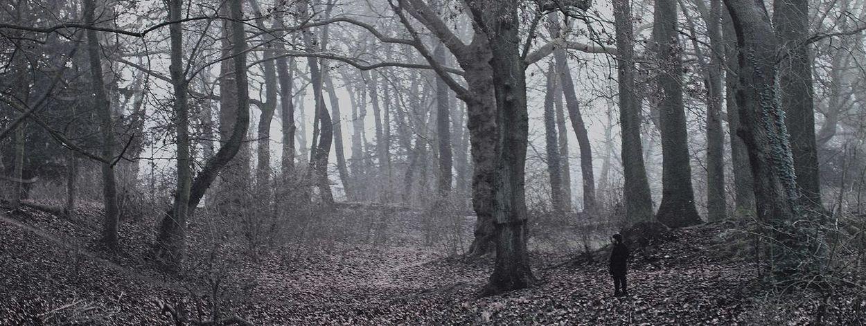 Nuit de brouillard. Lille Citadelle Parc Brouillard