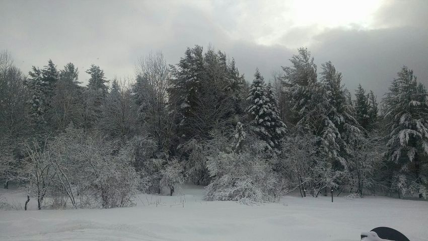Relaxing Taking Photos Hanging Out The Calmness Within Check This Out Snow Is Here Snow Trees Snow Enjoying Life In Lyndonville, VT