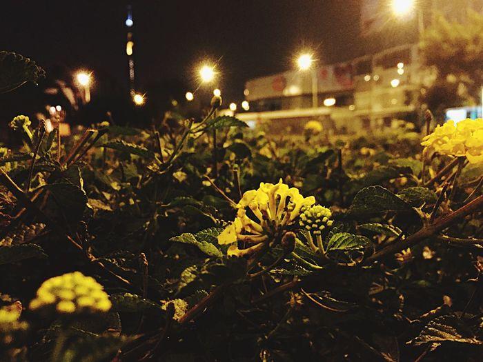 Naturaleza Urbana Textured  Pequeños Detalles Plant Outdoors