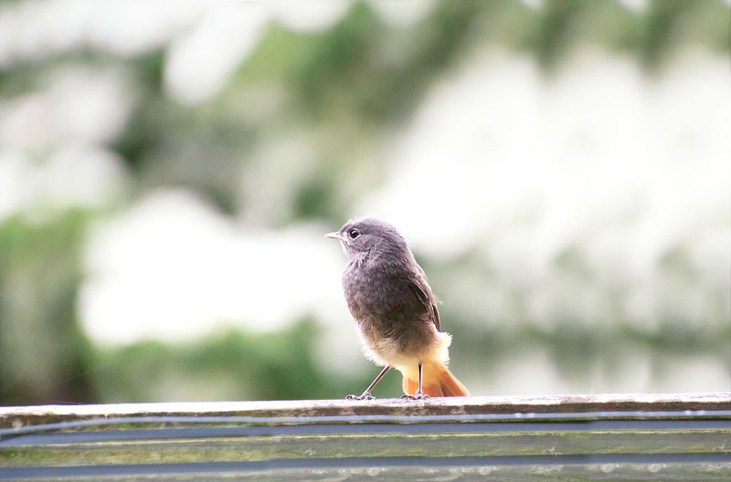 Close-up of bird perching on railing