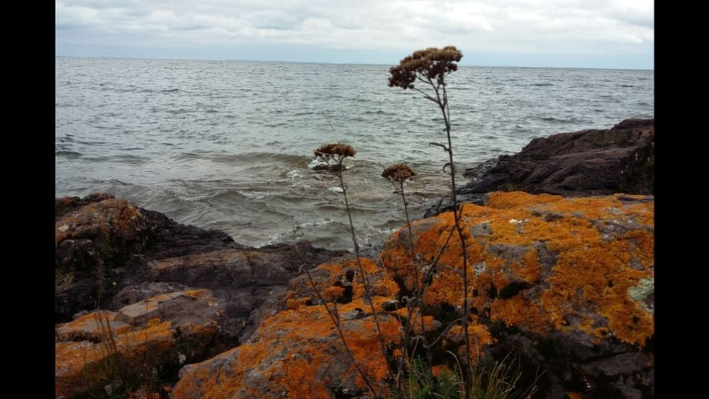 North shore of Lake Superior Sea Water Horizon Over Water Scenics Tranquil Scene Auto Post Production Filter Beauty In Nature Sky Tranquility Transfer Print Tree Beach Nature Growth Non-urban Scene Plant Tourism Cloud - Sky Majestic Outdoors Picsartrefugees Coastline