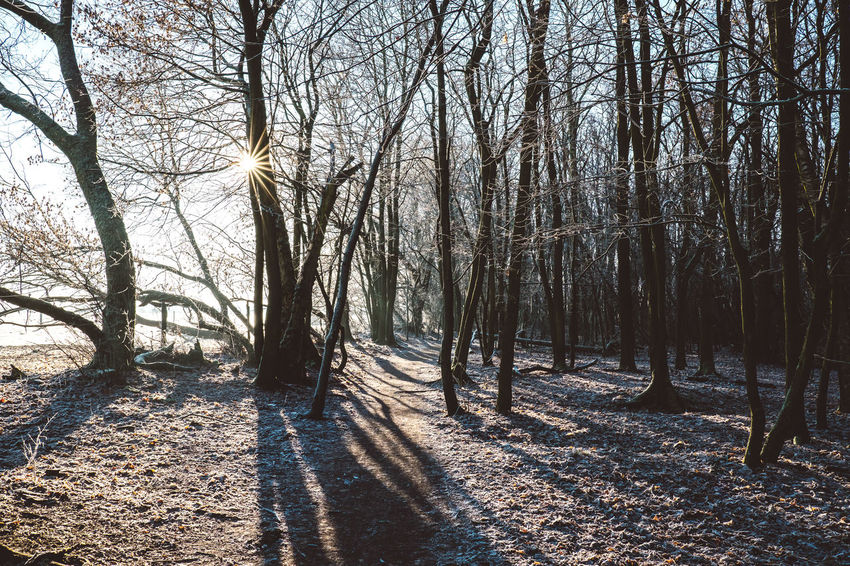 last winterwalk for 2016. Have a good start in the new year! Bare Tree Beauty In Nature Cold Temperature Day Forest Landscape Nature Outdoors Sky Snow Sunlight Tranquility Tree Tree Trunk Winter Xpro2