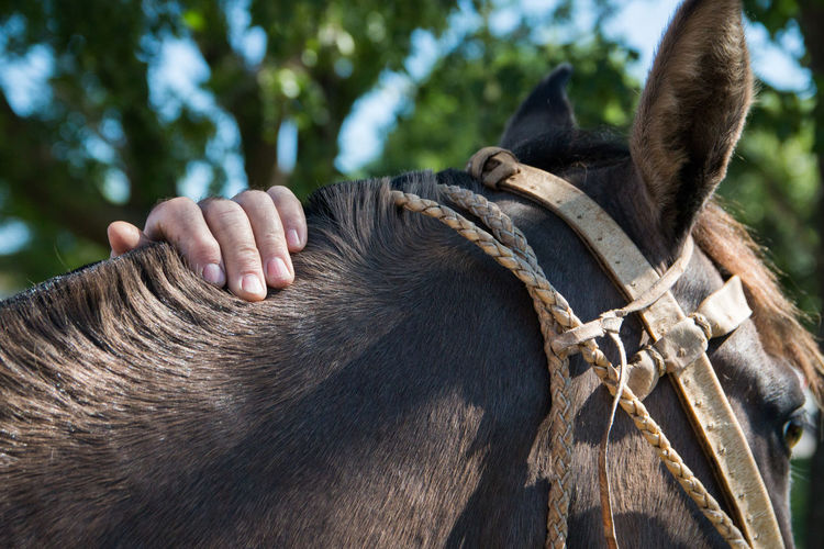 Person caressing horse