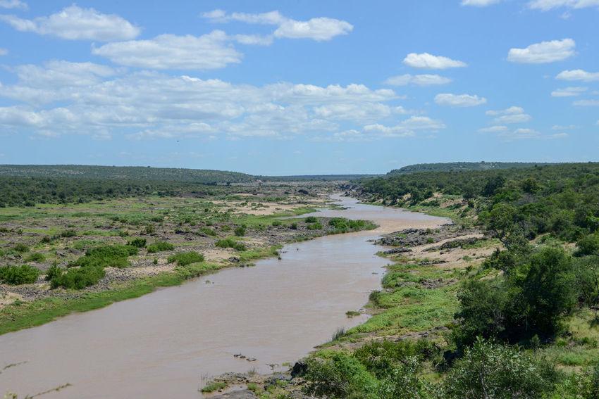 Safari in Kruger National Park, South Africa Kruger Park National Park Olifants River River View South Africa Wildlife & Nature Africa Kruger Krugernationalpark Krugerpark Landscape River Safari
