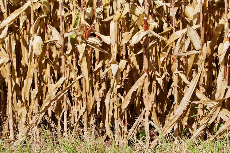Full frame shot of plants on field