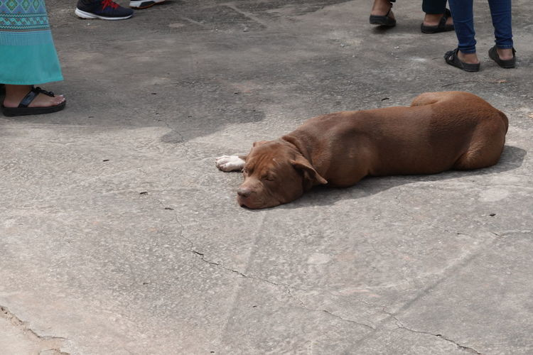 High angle view of dog on street in city
