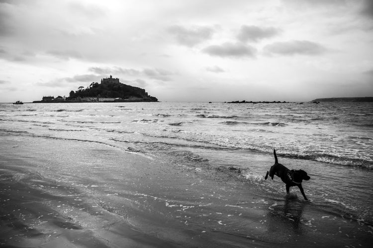 Balance Beach Blackandwhite Coastline Enjoying Life Exploring Eye4photography  EyeEm Best Shots EyeEm Nature Lover Getting Away From It All Horizon Over Water My Dogs Are Cooler Than Your Kids Outdoors Sand Sea Shore St Michaels Mount Black And White Friday