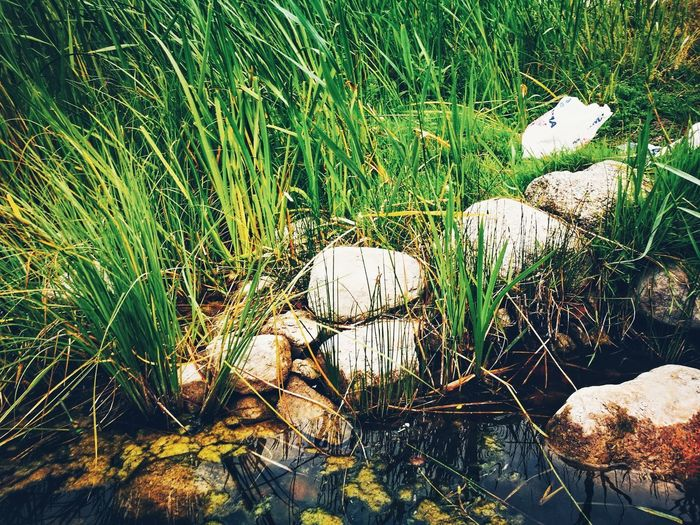 rocks by the water EyeEm Selects Scenics - Nature Summertime Lakeshore Reed Lakeside Rural Scene Calm Texture Sunlight Backgrounds Full Frame High Angle View Grass Close-up Green Color Growing Plant Life Green Young Plant Countryside Greenery Grassland