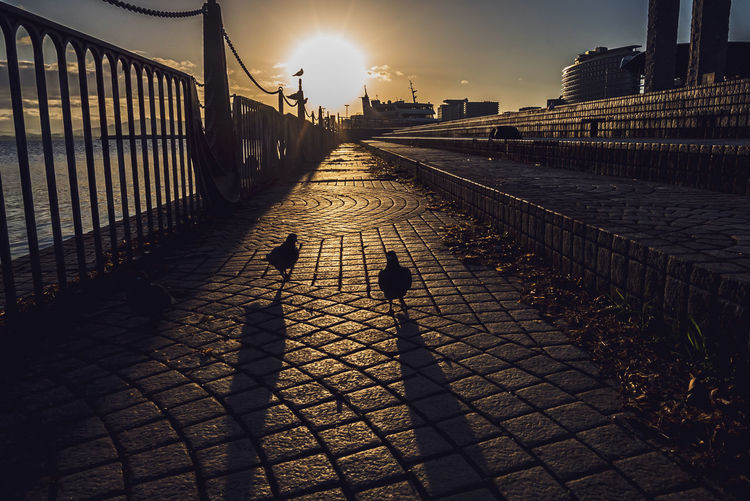 Shadow of birds on footpath during sunset