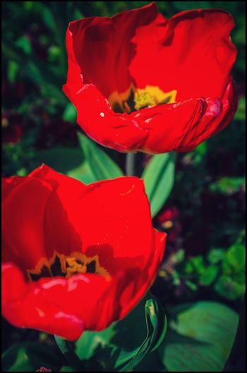Beautiful Sunlight Rows Of Things Kris Demey Photography EyeEm Best Shots EyeEm Masterclass EyeEm Best Edits EyeEmBestEdits EyeEmBestPics EyeEm Gallery Up Close And Personal Depth Of Field Monet Garden
