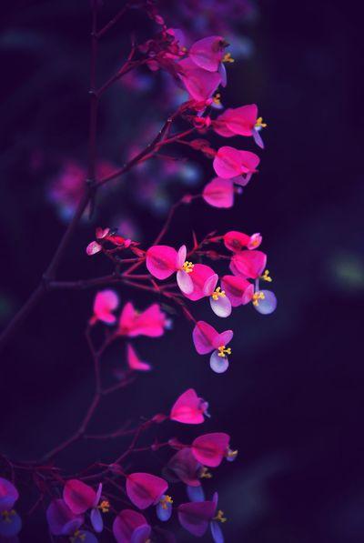Ensemble Flower Beauty In Nature Plants