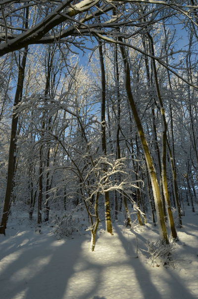 Sunshine Blue Sky Snow Winter Cold Temperature Tree Nature Beauty In Nature Bare Tree Tranquility Outdoors Tranquil Scene Landscape Branch Sky No People Day Shades Of Winter