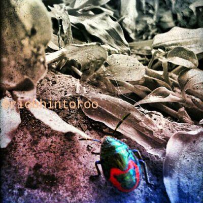 Perayu dan Penggoda Bumblebee Insect Grass Stone Nature IngridFX SExperia Instagram