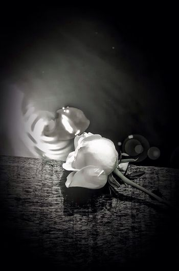 How beautiful? How sweet? Enjoying Life Nature_collection Bw_collection My Monochrome World