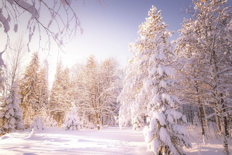 Daylight Snow Cold Temperature Winter Tree Beauty In Nature Sky Nature White Color Tranquility Frozen No People Covering Tranquil Scene Day Land Scenics - Nature Non-urban Scene Outdoors Extreme Weather Landscape Photography Freshness Scenics Travel Sunlight