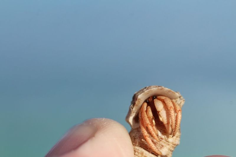 Human Hand Human Body Part Close-up Beach Holding Shell Eyes Sea Life Hermit Crab Hermit Animal Themes Animal Wildlife One Person One Animal