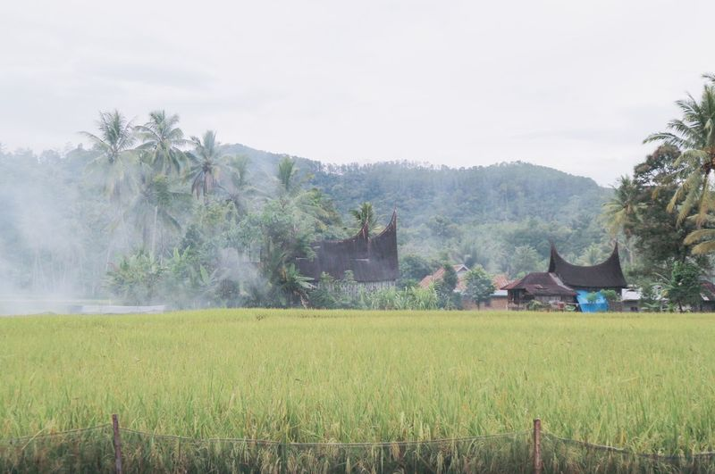 minang village Tradisional Indonesia Traditional Art Traditional Village Traditional House Bukit Padi Kampung Halaman Village Garden Photography Garden Garden INDONESIA Sumbar Minang Padang Kebun Plant Tree Field Land Growth Sky Day No People Nature Architecture Green Color Beauty In Nature Grass Rural Scene