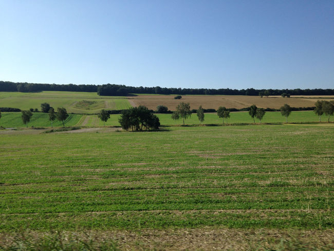 Beauty In Nature Clear Sky Day Field From Train Window Grass Grassy Green Horizon Over Land Idyllic Landscape Nature No People Non-urban Scene Norddeutschland Northern Germany Outdoors Remote Rural Scene Scenics Sky Tranquil Scene Tranquility Tree Trees