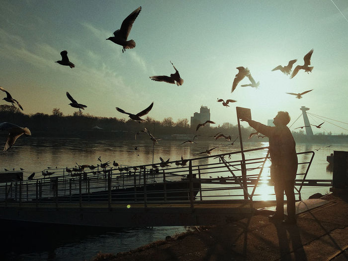 Bird Spread Wings Flying Water Sea Fisherman Mid-air Silhouette Flock Of Birds Seagull