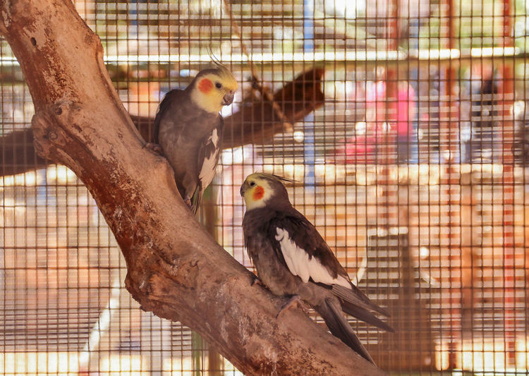 "two parrots sitting on tree at the zoo ""Monkey Forest"" in the village Yudfat, Israel Animal Themes Apple Bird Branch Day Entertainment Israel Monkey Monkey Foresr Nature No People Parrot Sitting Taking Photos Tourism Traveling Tree Two Animals Village Yudfa Zoo Zoo Animals  Zoology"