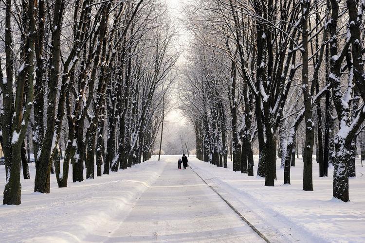People Walking On Snowy Field Amidst Trees