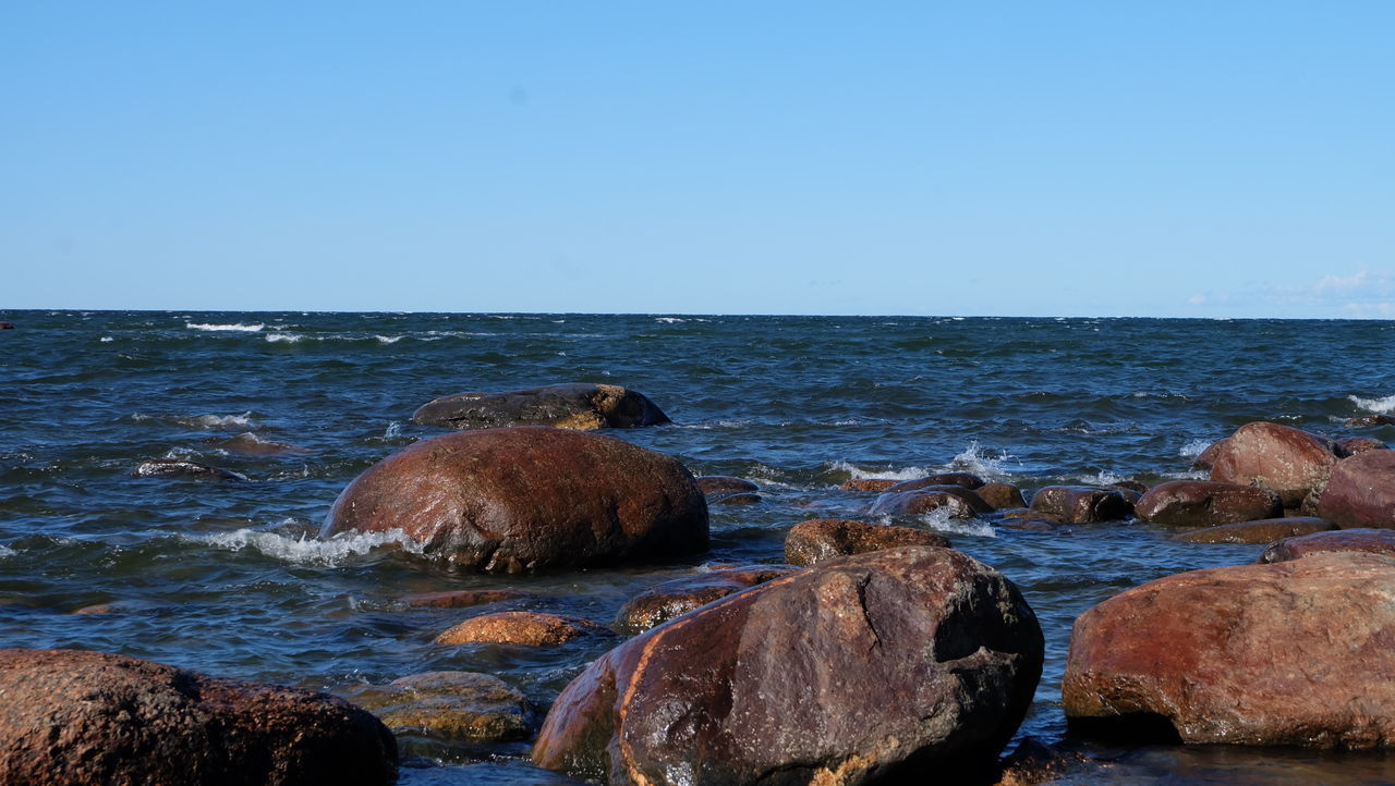 water, sea, sky, rock, horizon over water, horizon, rock - object, beach, nature, day, solid, clear sky, beauty in nature, land, scenics - nature, animals in the wild, no people, motion, animal wildlife, outdoors, marine