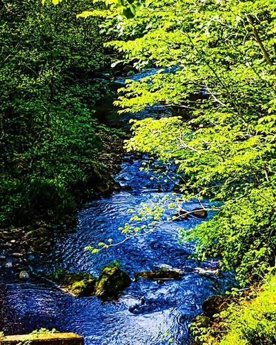 River Trees Nature Naturelover Wilderness Scotland Scenic Nikon Nikonphotography Scenery Pr0ject_uno Peaceful Discoveryearth Naturalplanet Earth