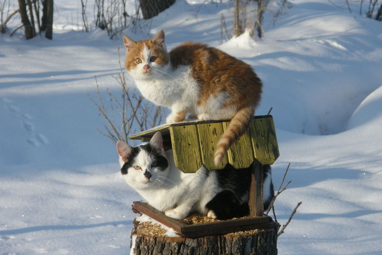 Cats on snow covered field