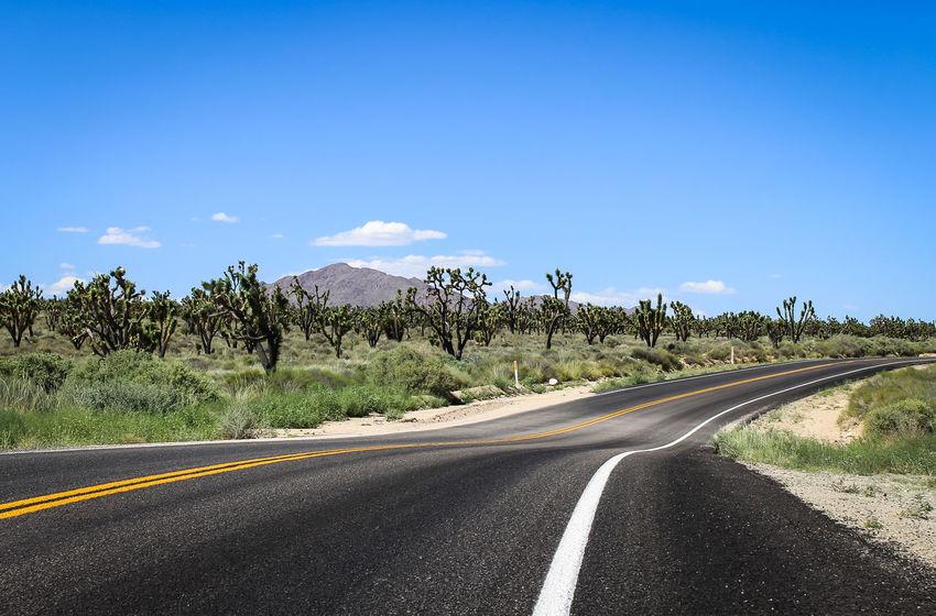 Asphalt California Dividing Line Joshua Tree Joshuatree Landscape Mojave Desert Mojave National Preserve Nature Outdoors Road Road Marking Scenics Sky Southern California