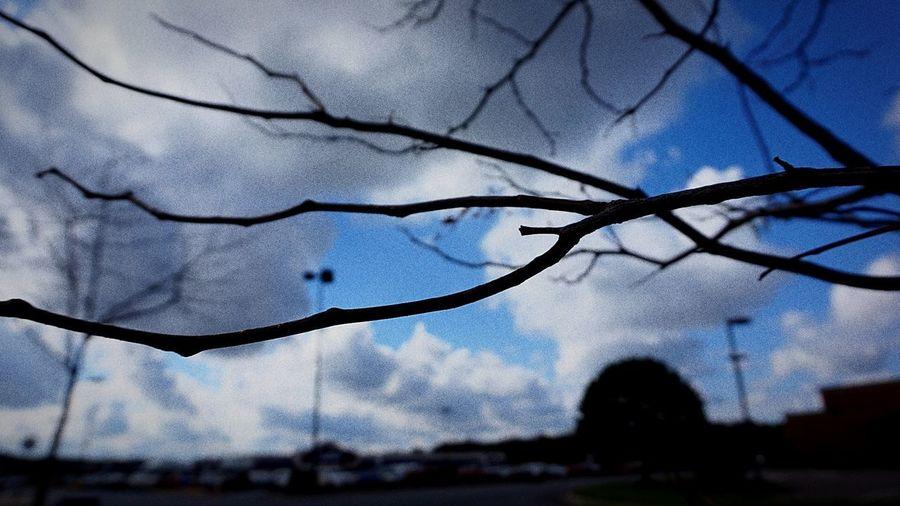 Tree Water Drop