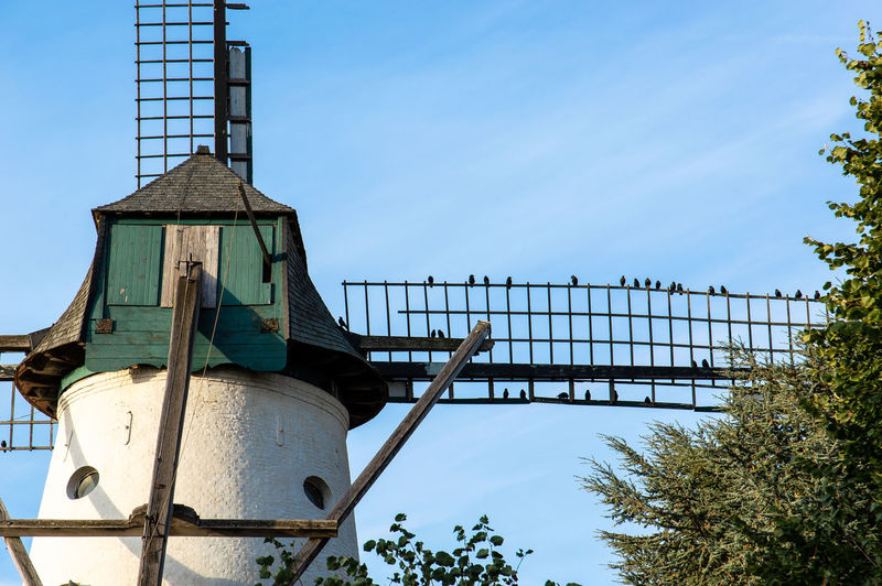 birds sitting on mill wick Bird Photography Row Of Birds Architecture Birds Blue Sky Built Structure Mill Mill Wicks No People Sky