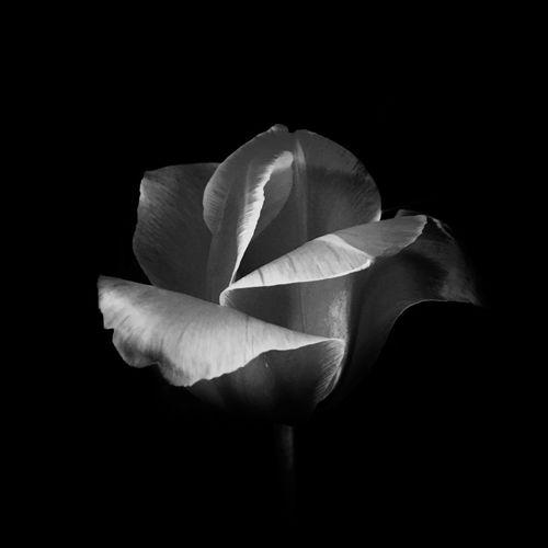 EyeEm Nature Black And White Blackandwhite Flowers Beautiful Night Lonely