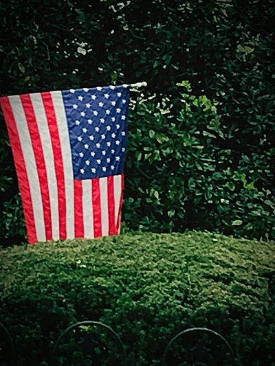 Let your flag show your heart. Green Red Flag Patriotism Striped Stars And Stripes No People Red Independence Outdoors Day Blue Close-up Tree