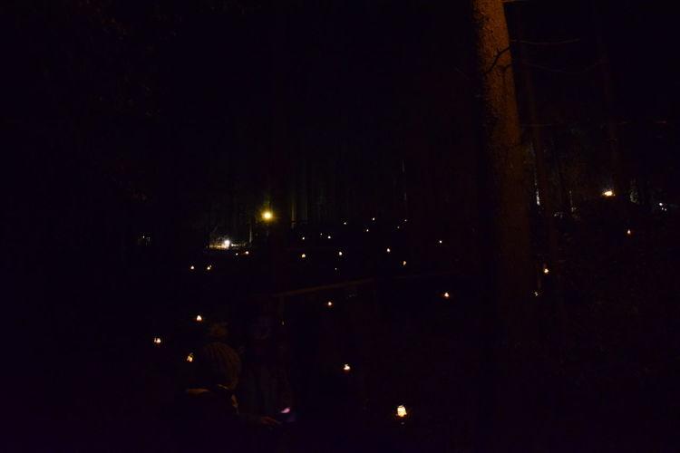 Christmas Dark Forest Illuminated Night Nightphotography No People Weihnachstmarkt Winter