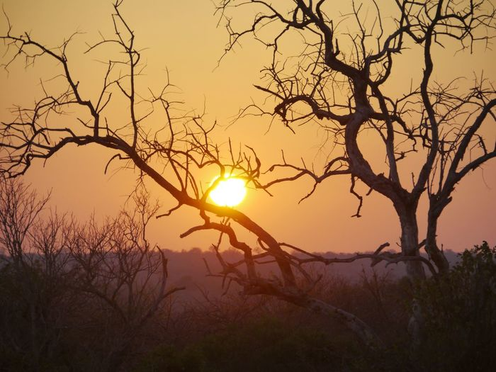African Sunrise Licht In Afrika Südafrika Greater Kruger National Park Vuyani Lodge South Africa Sonnenaufgang In Afrika African Sunrise Dawn Of A New Day Sunrise Sun Tree Bare Tree Nature Beauty In Nature Sunlight Silhouette Tranquil Scene