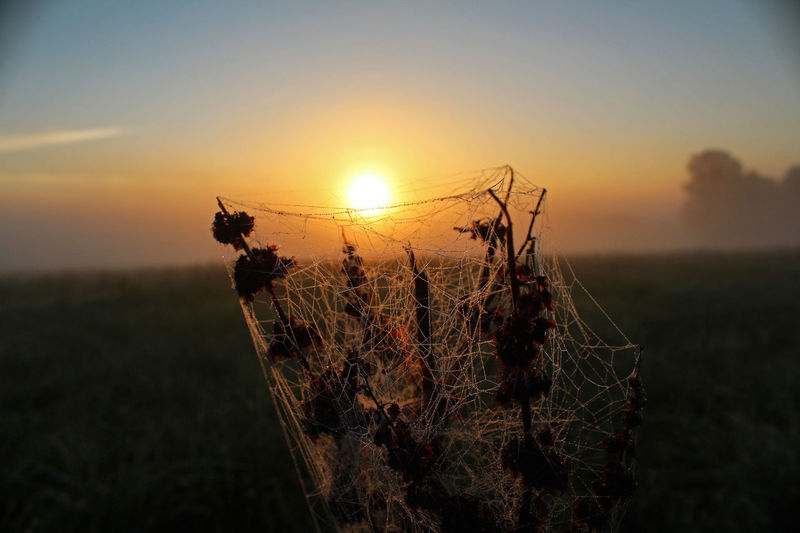 EyEmNewHere Orange Sky Agriculture Animal Themes Beauty In Nature Canonphotography Close-up Day Dust Field Growth Landscape Nature No People Outdoors Plant Rural Scene Scenics Sky Spider Web Sun Sunrise Sunset Tranquil Scene Tranquility