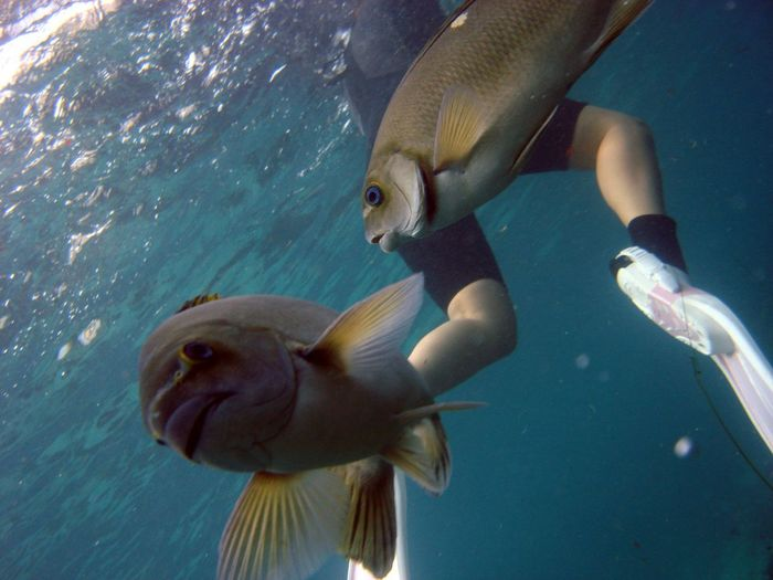 Low section of person scuba diving by fishes in sea