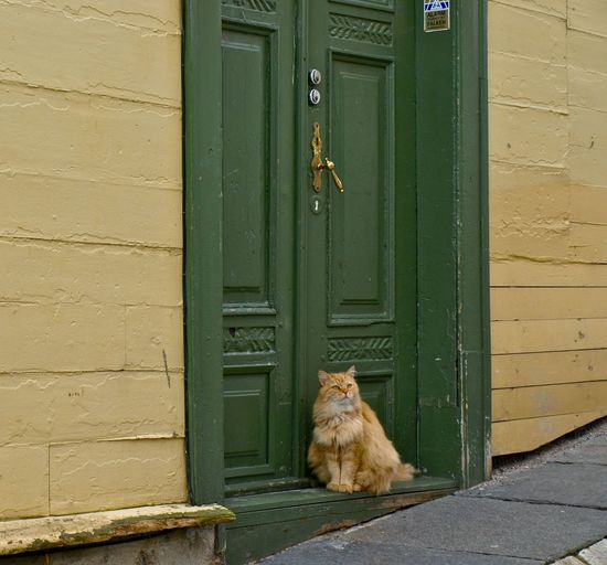 Cat At Doorway