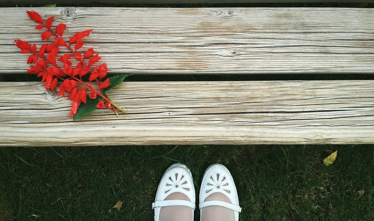 Low section of woman in front of red leaves on wooden bench