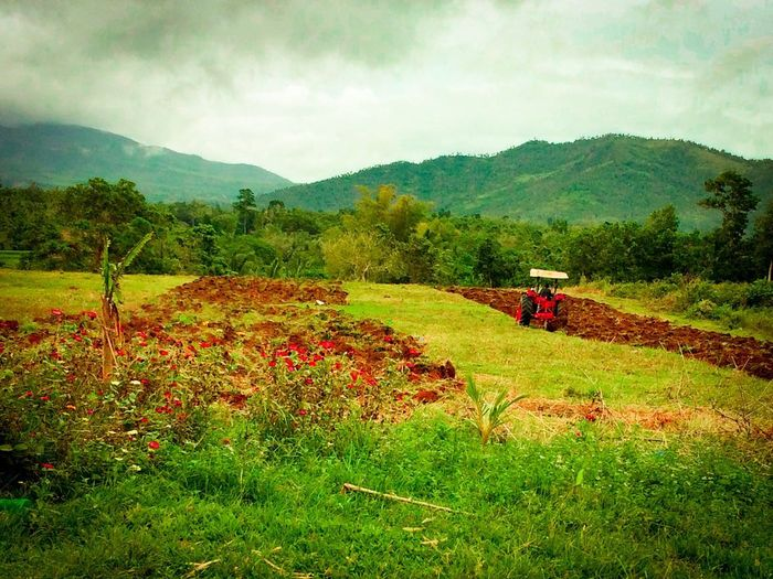 Growth Agriculture Field Nature Beauty In Nature Farm Sky Landscape Tractor Rural Scene Scenics Agricultural Equipment Outdoors Green Color No People Tranquil Scene Plant Tranquility Combine Harvester Eyeem Philippines